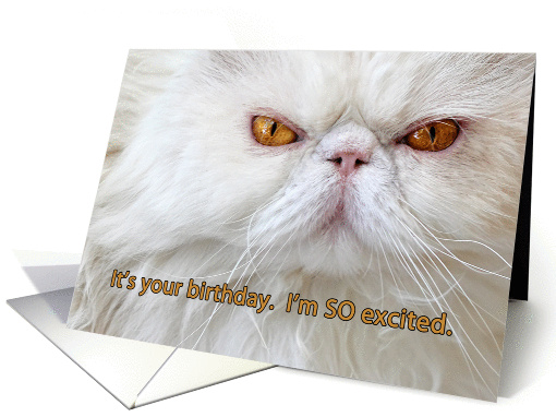 Birthday Card Angry Cat Photograph White Persian Humor Card