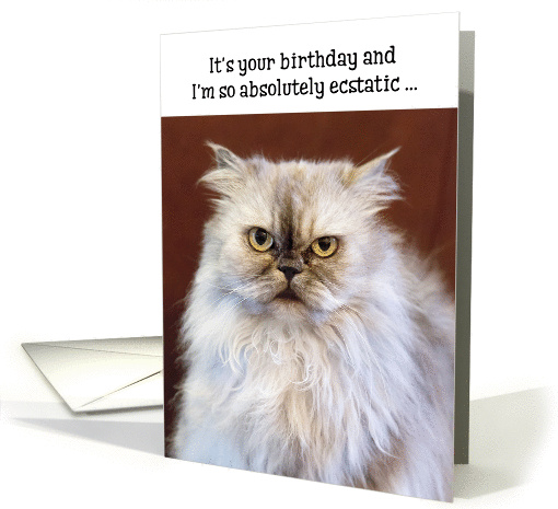 Humorous Birthday Card Ecstatic Persian Cat Card 1370848