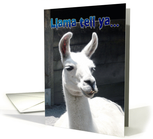 Happy Birthday Funny Llama Card 806822