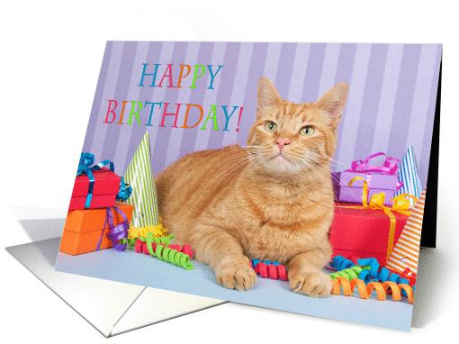 Happy Birthday Tabby Cat Card 1438372