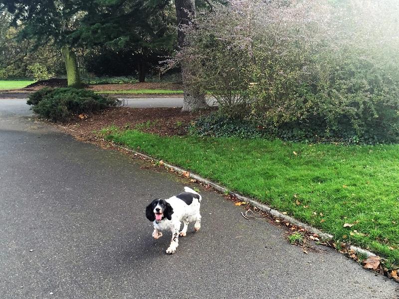 Dulwich Park walk - Sally's dog adventures