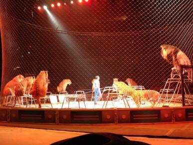 2016-circus-5