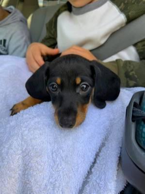 New Dog - Lulu - 4.21.2020 6