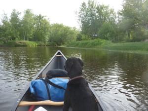 Canine canoeing companion