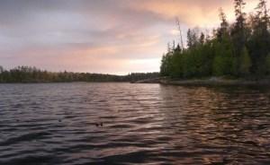 Charred, crispy leaves floating on the lake