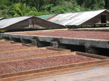 cocoa drying with roof, and undertrays