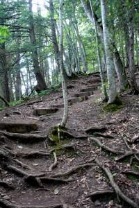 owen sound path