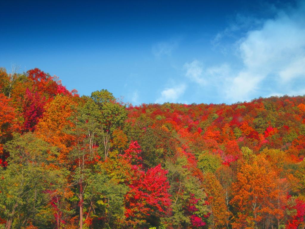 autumn colors in asheville