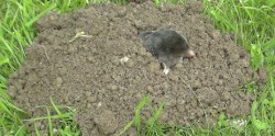 Mrs Mole, mother of invention