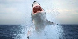 Sharks beware