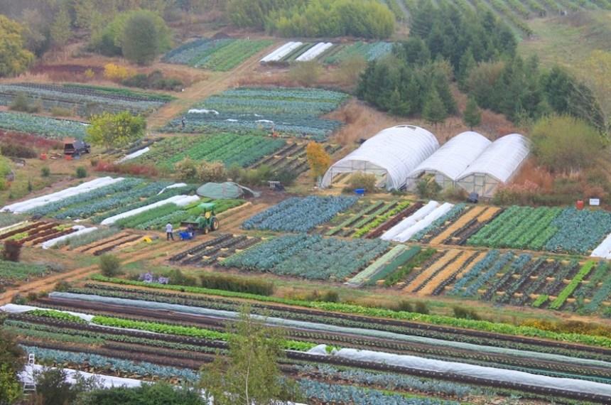 Singing Frogs Farm, in Sebastopol, Calif., is the very picture of compact, intensive farming. This is made possible, the Kaisers say, by their embrace of no-till agriculture (submitted photo).