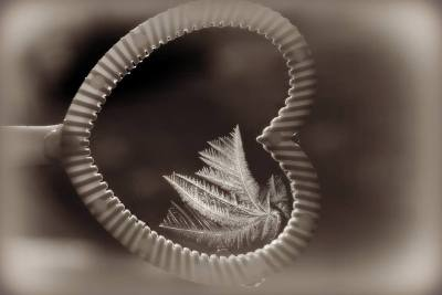 """Winter's Wings,"" by Julie Street; photo courtesy Berkshire Art Association."