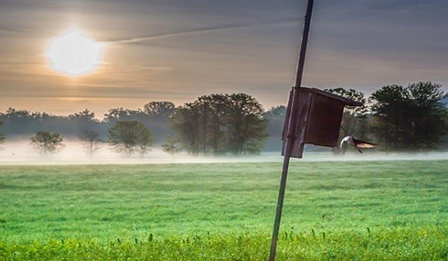 Dawn at Arcadia Wildlife Preserve;  photo by Phil Doyle