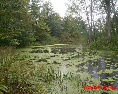 Photo of. September 21, 1999 - Algae on river below New Lenox Road at low water