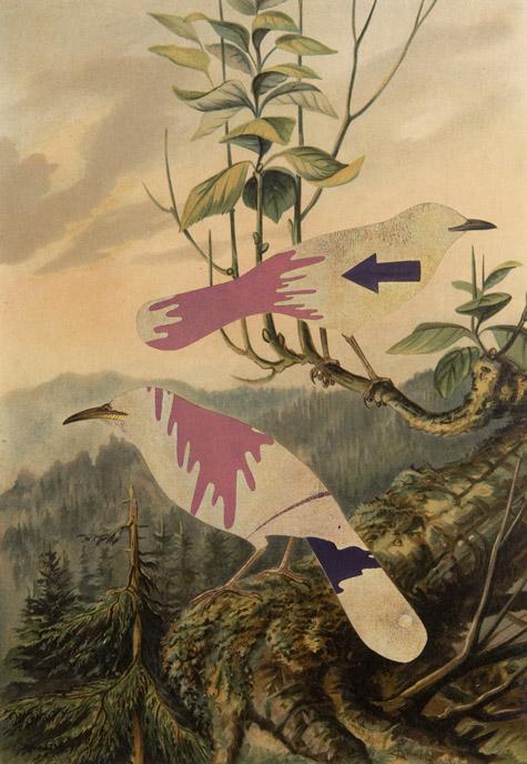 Jiri Kolar - Birds (untitled no. 5)