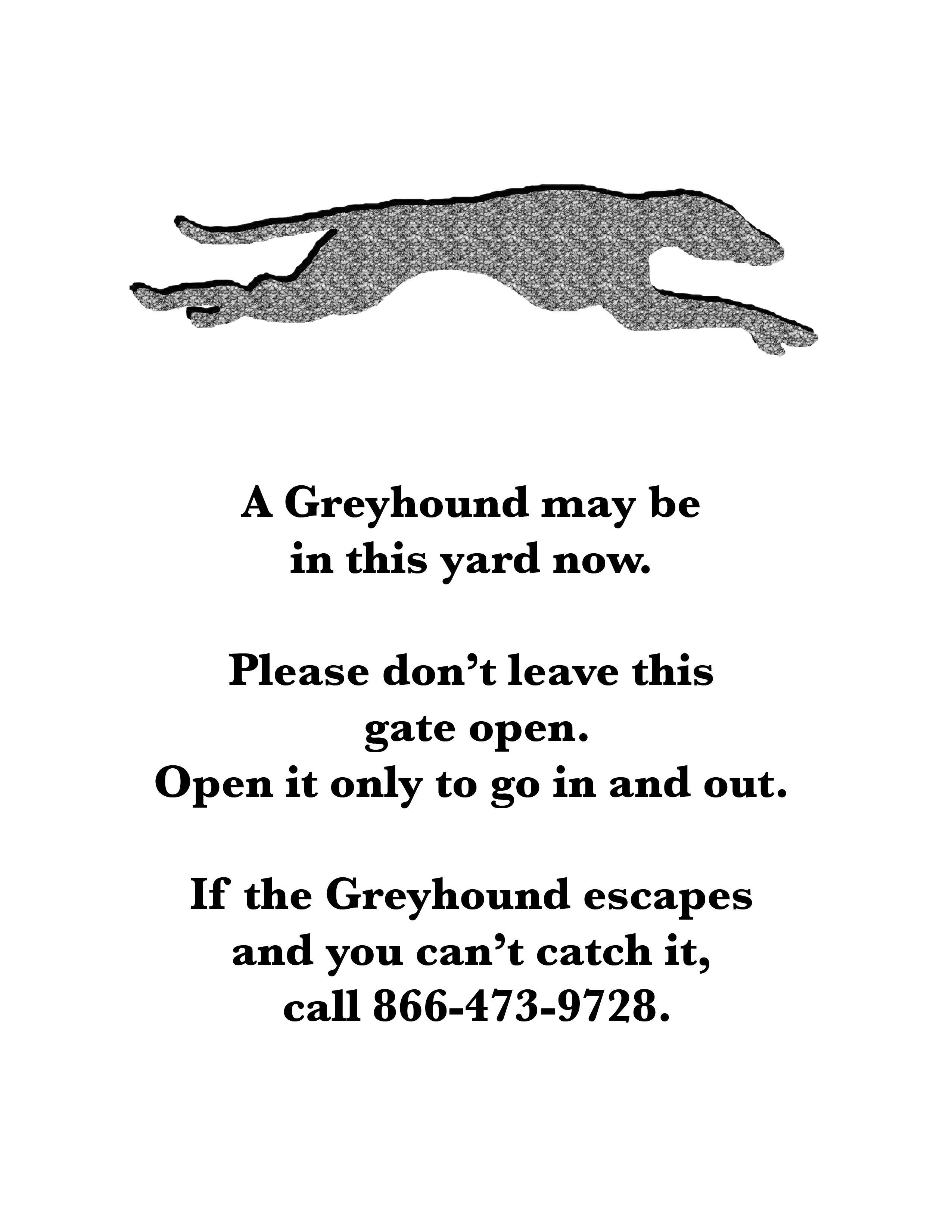 Lost Greyhound