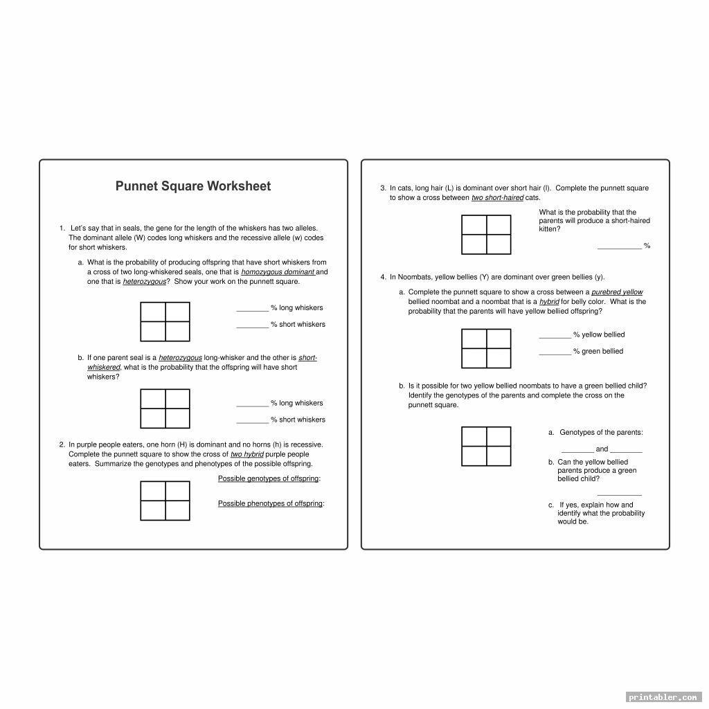 Printable Punnett Square Worksheets