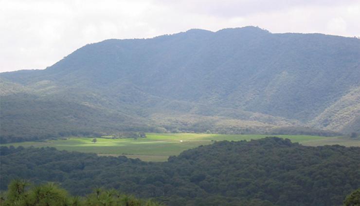 Vista panorámica del bosque La Primavera. Foto: salvemoslaprimavera.wordpress.com