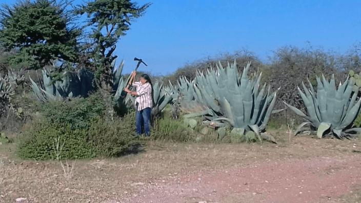 Alerta por ecocidio en Santa María de Gallardo (Aguascalientes)