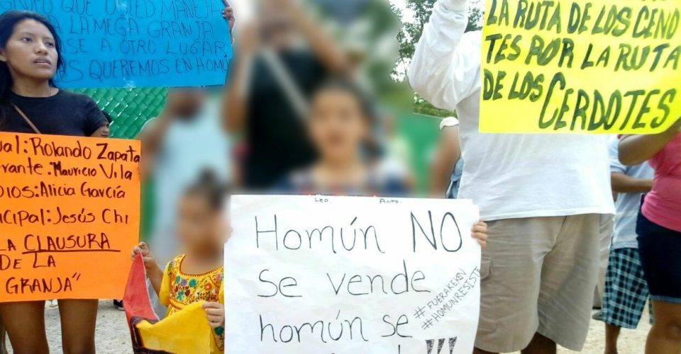 Niños ganan batalla a granja de cerdos en Yucatán: juez suspende sus operaciones