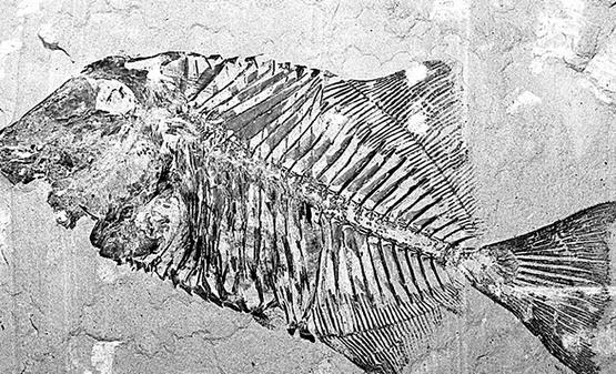 El Tren Maya amenaza el patrimonio paleontológico
