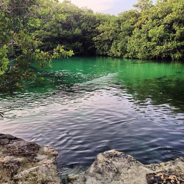 casa cenote best things to do in Tulum