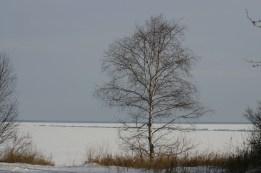 tree-at-mile8
