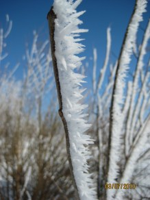hoar-frost-on-branch-at-lakeshore