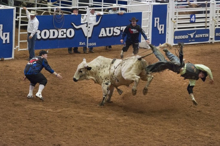 Image result for bull ride