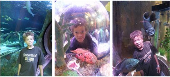 SeaLife Aquarium Fun & Giveaway!