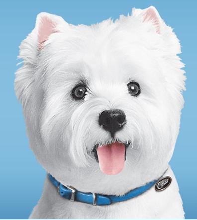 FREE Cesar Savory Delights® Entrée Dog Food!
