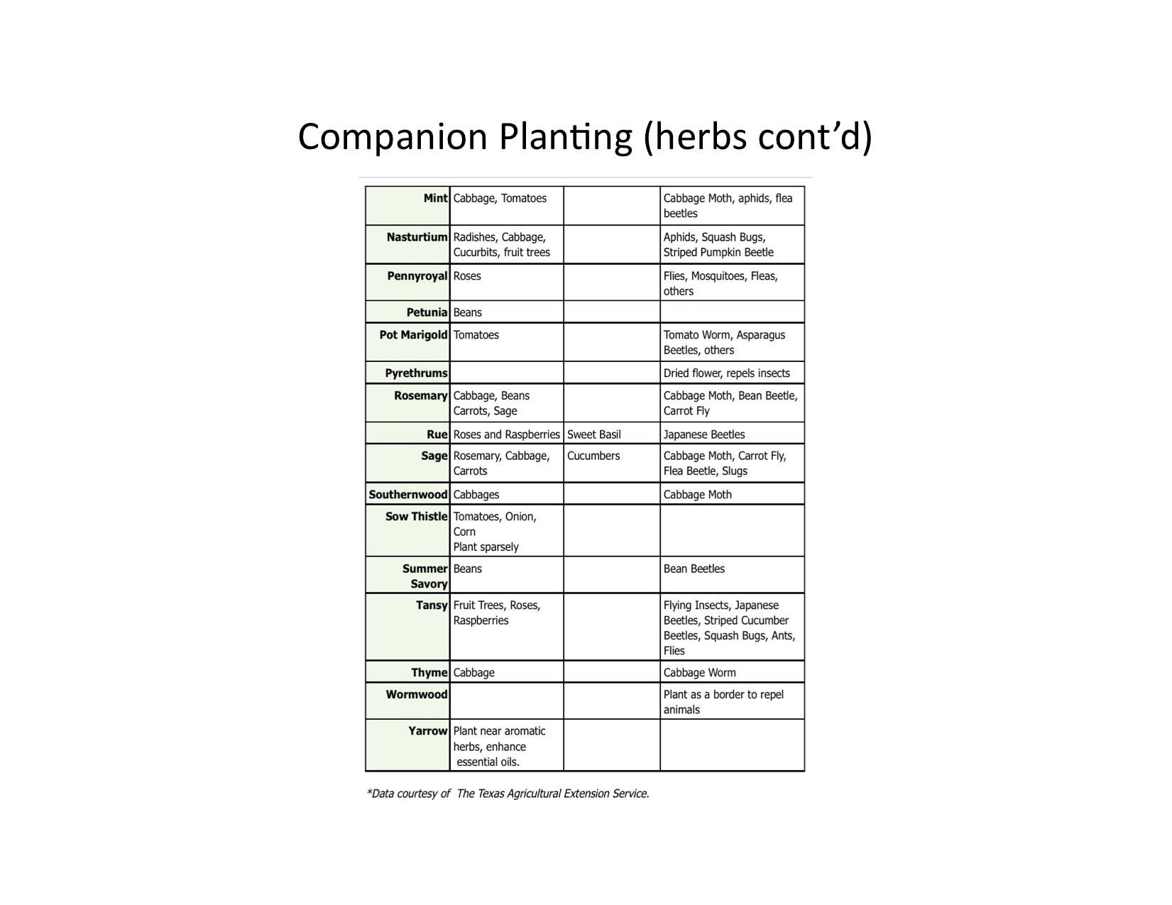 Interplanting Companion Planting For Pest Control And