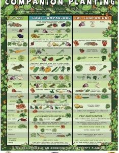 Companion planting poster also interplanting for pest control and healthier rh groedibles