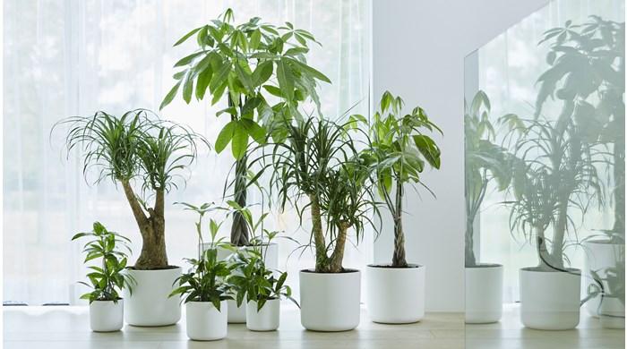 kamerplanten kopen  Groencentrum  Inspiratie voor uw tuin