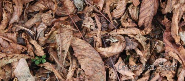 herfstbladeren-en-onkruid