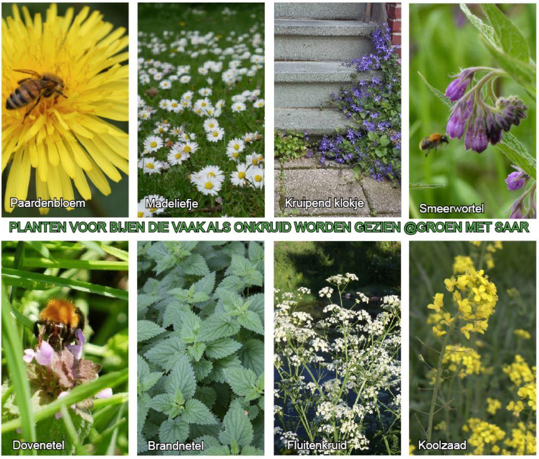 Planten Voor Bijen.Wij Kunnen De Bijen Helpen Doe Je Mee Groen Met Saar