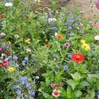Bloemen zaaien voor de bijen