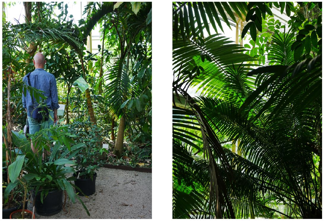 Botanische Tuin Leiden : De hortus botanicus in leiden u2013 groen met saar