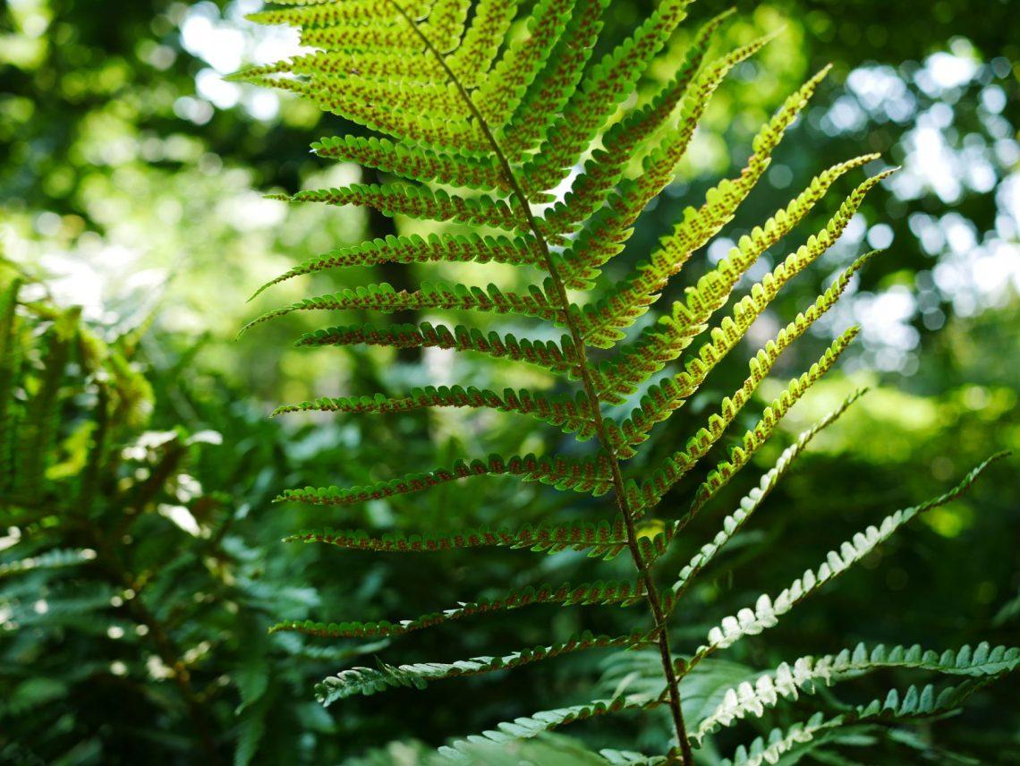 Fabulous 9 van mijn favoriete (half)schaduwplanten – Groen met Saar @DR95