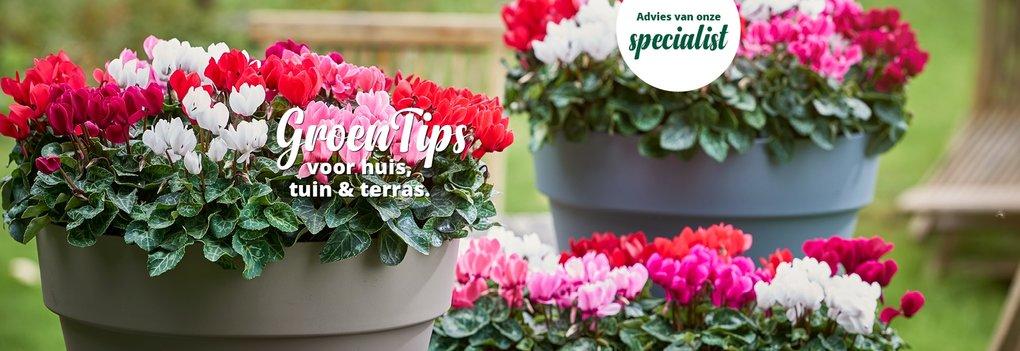 Tips april  Tuintips  GroenRijk