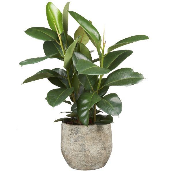 Top 10 luchtzuiverende planten  GroenRijk