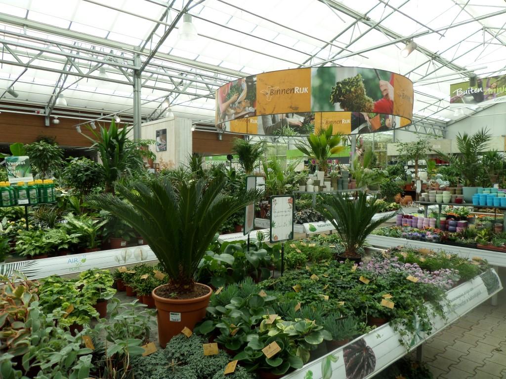 Diverse kamerplanten groot en klein  Assortiment