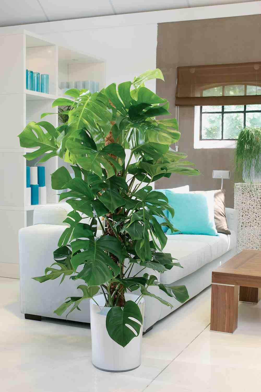 Kamerplanten Robs Tuinverbouwing