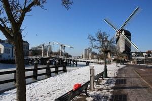 Stadsganzenbord in de Winter