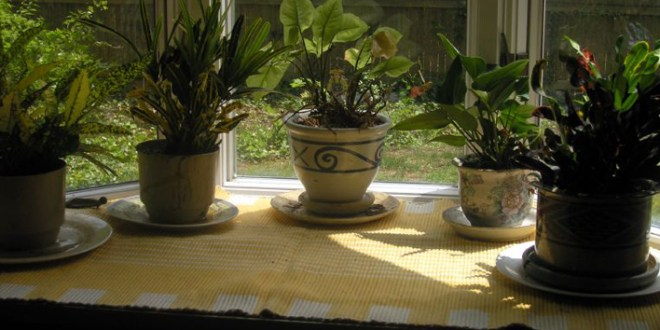 3 Steps For Healthy Indoor Plants