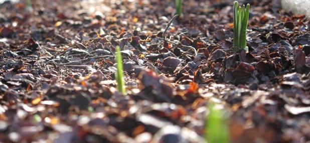 seedling mulch