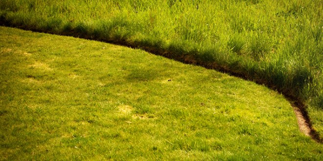 Basic Lawn Care