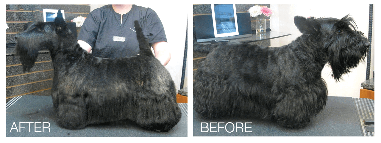 Scottie Pet Trim Groomer To Groomer