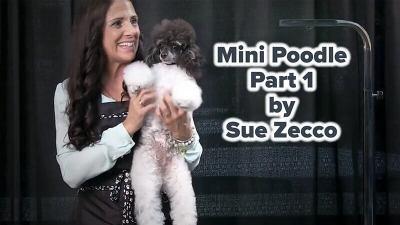 Mini Poodle Part 1 by Sue Zecco