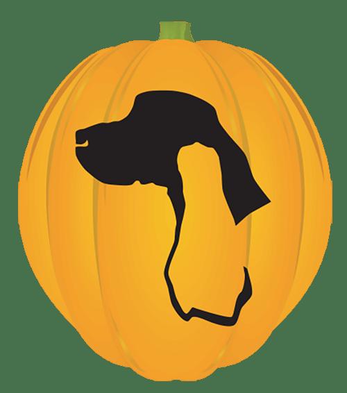 Sporting Breed Pumpkin